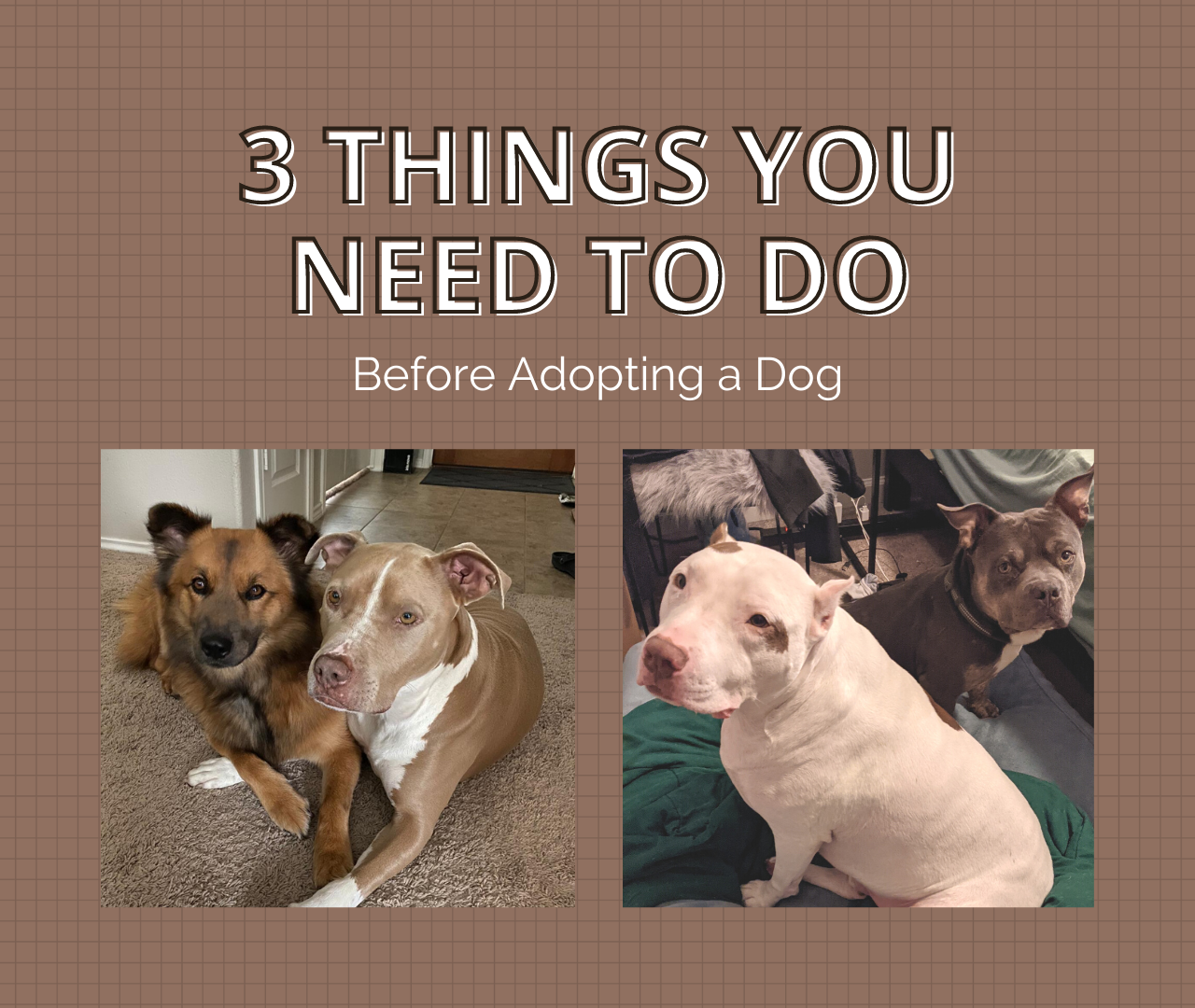 3 Things You Need to Do Before Adopting a Dog